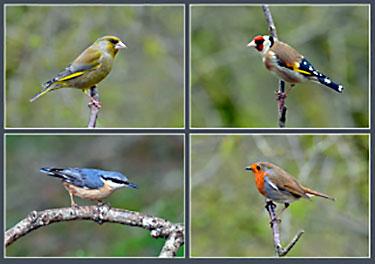 garden song birds on a card