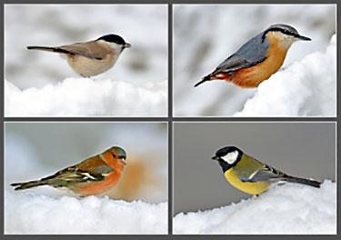 picture of garden birds in snow