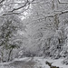 new forest in snow