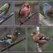 birds of the woods