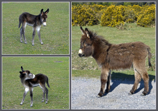 donkey foals