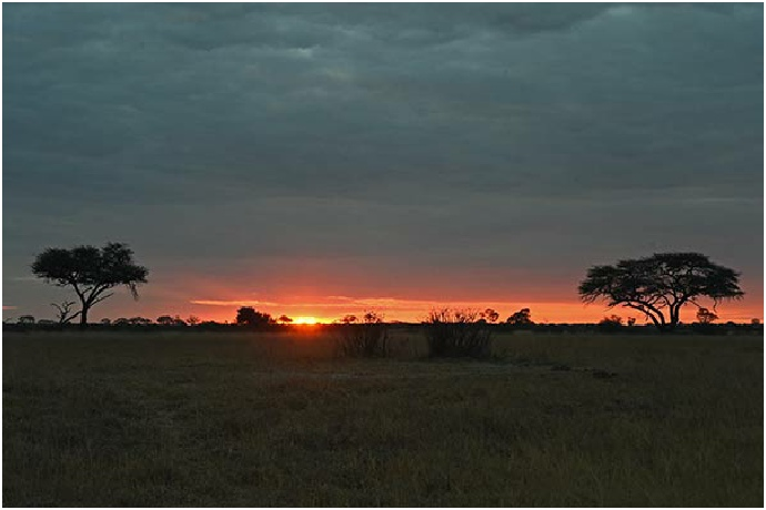 Picture of Hwange Sunset in Zimbabwe