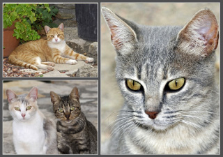 73. Domestic Cats