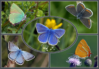 pictures of small butterflies